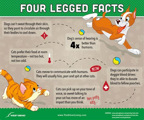 some interesting facts you can consider while buying did you know pet fun facts