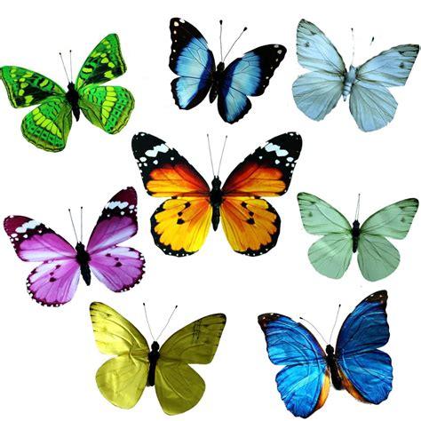 imagenes mariposas de colores imagenes thinglink