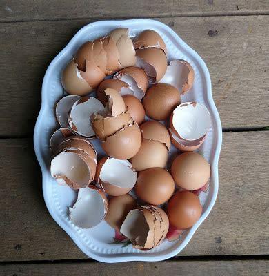 Pupuk Top Kalsium cara mudah membuat pupuk organik dari cangkang kulit