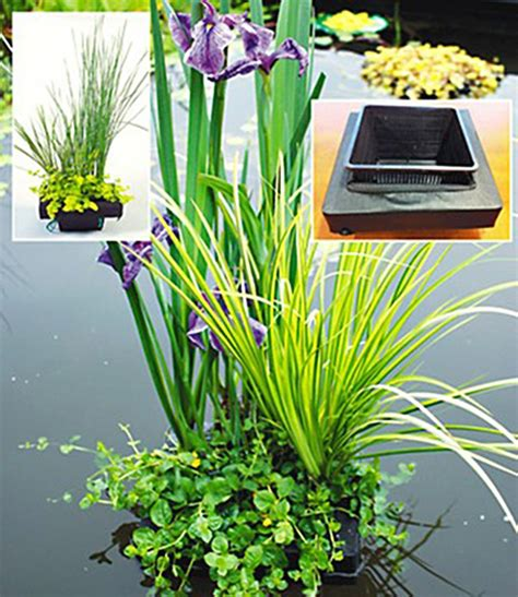 wasserpflanzen f r teich 311 wasserpflanzen insel mit schwimmrin teichpflanzen bei