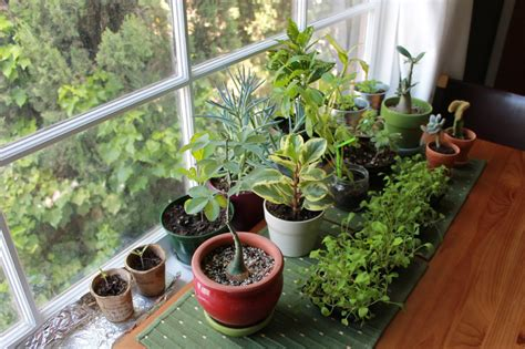 good house plants grow your own fresh air with 3 indoor plants the hearty soul