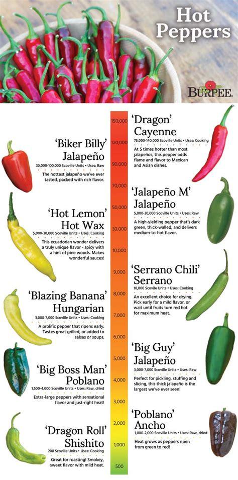 types of garden peppers peppers varieties