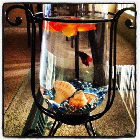 beta fish centerpiece fish and tank ideas