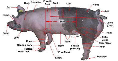 pig sections hog body parts
