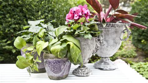 piante da veranda piante da balcone idee colorate e profumate dalani