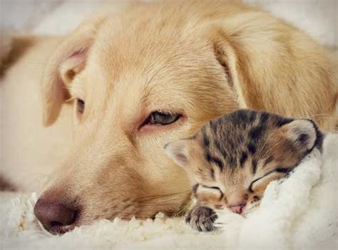 cats and dogs living together cats and dogs living together who d thought compassionate care animal clinic