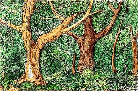 imagenes de encontrar animales ocultos cuntos animales escondidos encuentras en esta ilustracin