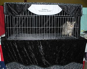 cat show drapes show curtains cat curtain menzilperde net