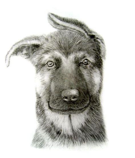 german shepherd puppy drawing german shepherd puppy pencil drawing my drawings german