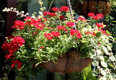piante fiorite da vaso come creare un vaso appeso fiorito fiori e foglie