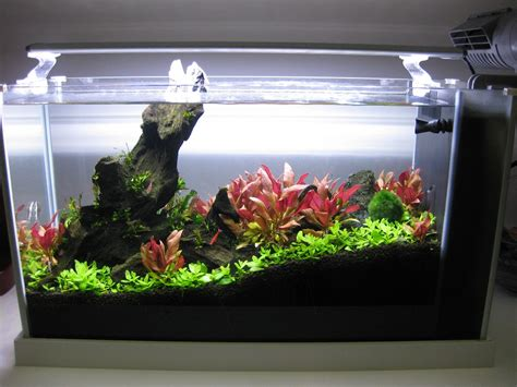 Fluval Spec V Aquascape by New Aquascape Set Up On Fluval Spec V Betta Tetra Shrimps