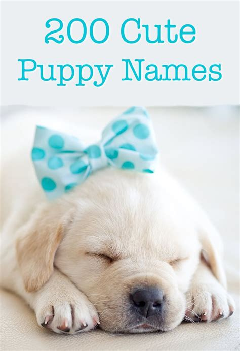 cutest puppy names best 25 puppy names ideas on pet names for dogs puppy care and care