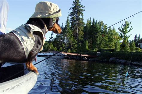 fishing boat costume dachshund gone fishin crusoe celebrity dachshund