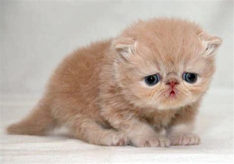 imagenes gatos tristes los 10 gatitos m 225 s triste de internet planeta curioso