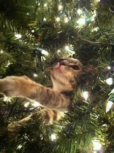 just another post of cats in christmas trees hoodie weather