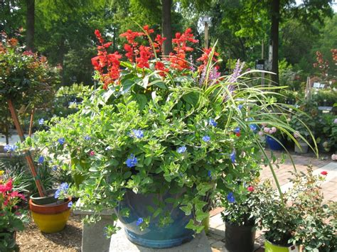 17 best images about sun containers on pinterest gardens container plants and colors