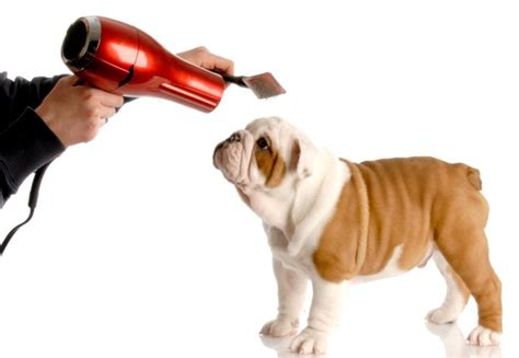 best age to get a puppy grooming advice eastcott vets swindon