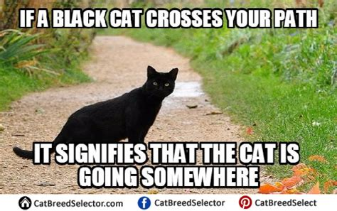 Funny Black Cat Memes - saturday july 22nd open thread the last refuge