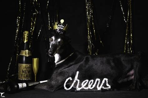 cheers happy new year silent sunday 12 30 cheers and happy new year tales