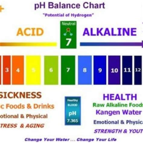 proper ph balance is critical for good health list of alkaline foods the ph balanced diet in5d