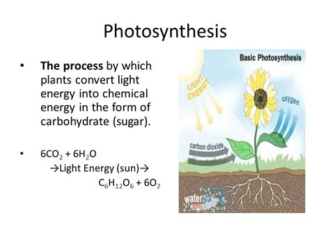 how is light energy converted into chemical energy during photosynthesis light energy converted to chemical energy ace energy