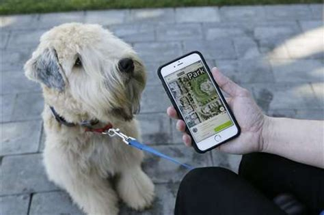 pet technology pet tech offers to keep animals safe healthy and connected