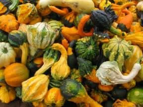 pictures of pumpkins gourds and ornamental corn