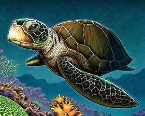 colors of turtles sea turtle by nicholasivins on deviantart