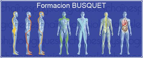cadenas musculares segun busquet cadenas musculares fisioterapia osteopatia acupuntura