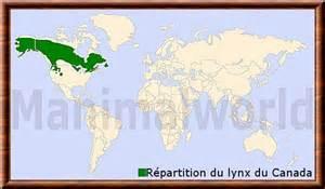 lynx du canada lynx canadensis