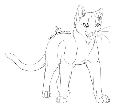 cat drawing template the gallery for gt warrior cat drawing outline