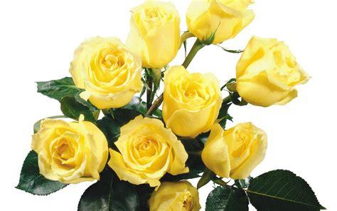 roses  love community google