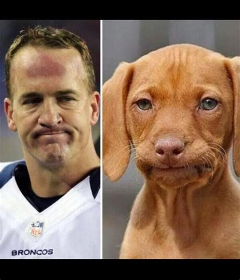 22 meme internet peyton face dog peyton dog