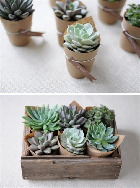 Wedding Gift Plant by 17 Best Ideas About Succulent Wedding Favors On