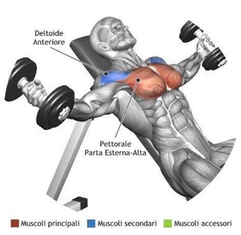 what muscles does incline bench work mens complete chest workouts