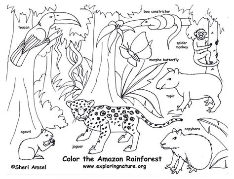 rainforest amazon coloring page exploring nature