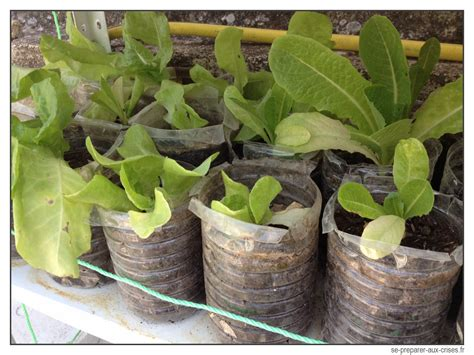 Faire Pousser Legumes Interieur by Dossier Crise Faire Pousser Ses L 201 Gumes Sans Jardin