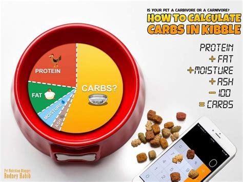 alimentazione a base di proteine l alimentazione gatto domestico ricette