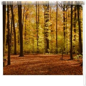 tree pattern roller blinds landscape seascape photography printed blinds by