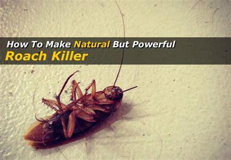 best roach killer best roach killer roach killer