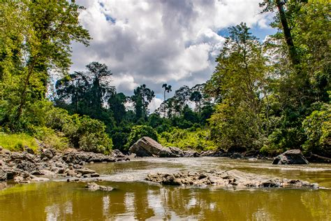 blogger borneo how does our work in danum valley relate to sdg 15 life
