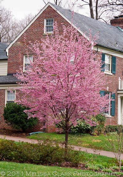 a special cherry tree garden shoots