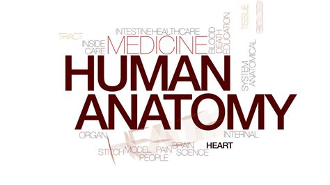typography motion tutorial part 2 human anatomy animated word cloud text design animation