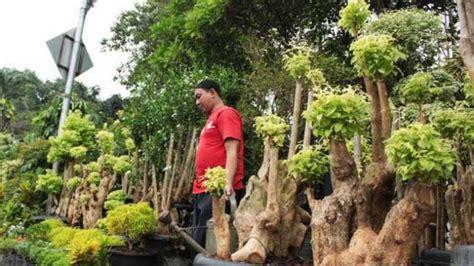 tanaman hias  cocok    rumah aman bagi