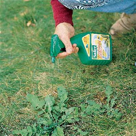 killing weeds without stressing grass your toughest lawn questions answered this old house