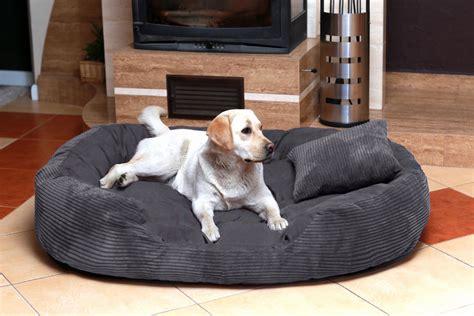 xxxl dog bed tierlando dog bed philipp soft cord velour 110 140 170cm