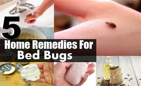 top home remedies  bed bugs diy health remedy