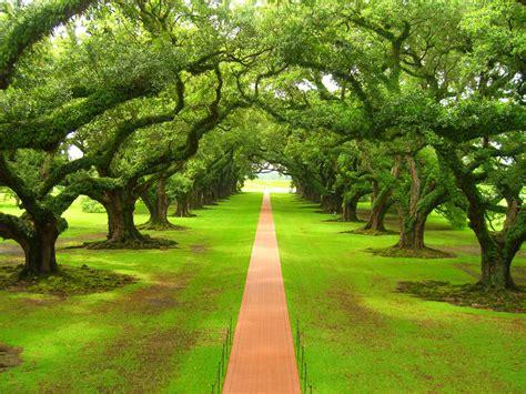 imagenes de paisajes relajantes bosques relajantes hd imagui