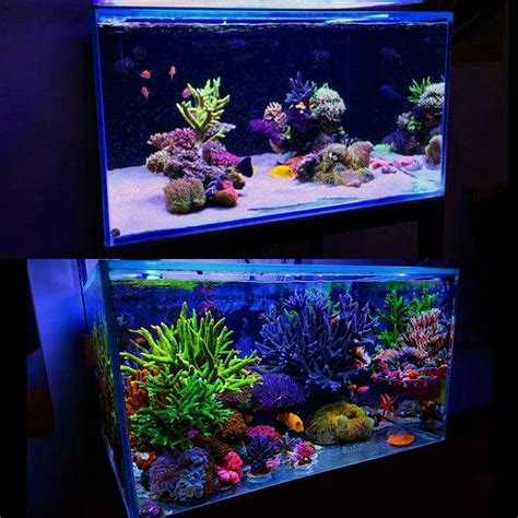 aquascape designs products before and after fish scales and plants oh my