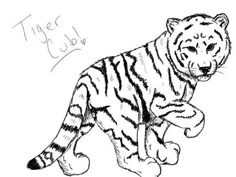 a nice sketch of white tiger cub coloring page download
